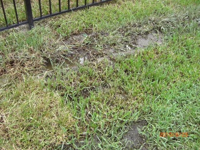 AAction Sprinkler Repair in the Orlando Area - Call 407-774