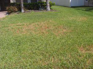 Sprinkler Repair Bad grass lack of water 3