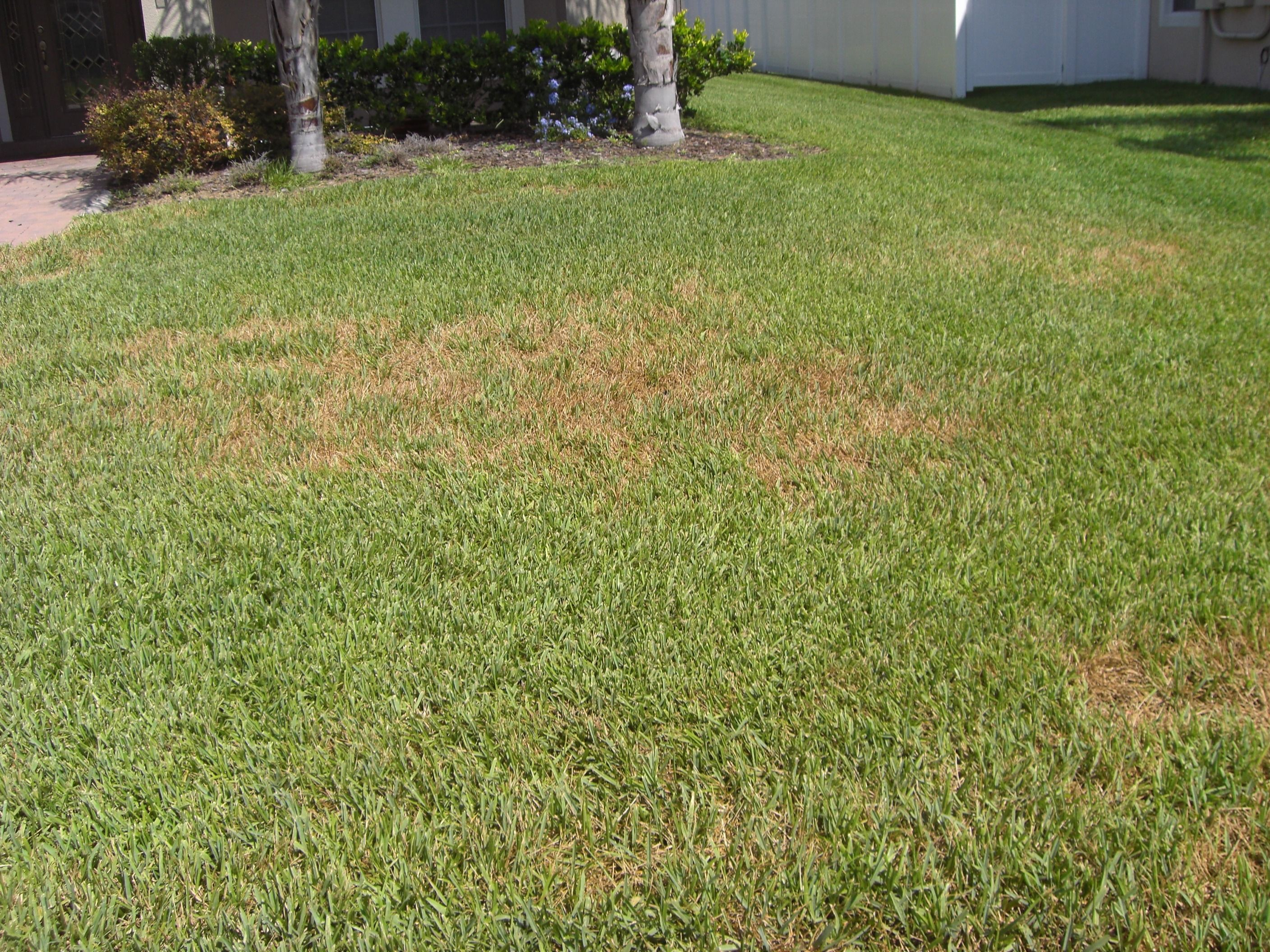 aaction sprinkler repair in the orlando area call 407 774 6648